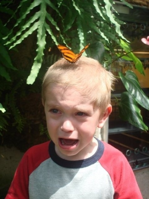 fear of butterfly kid